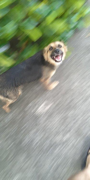 Happy dog running in a blur