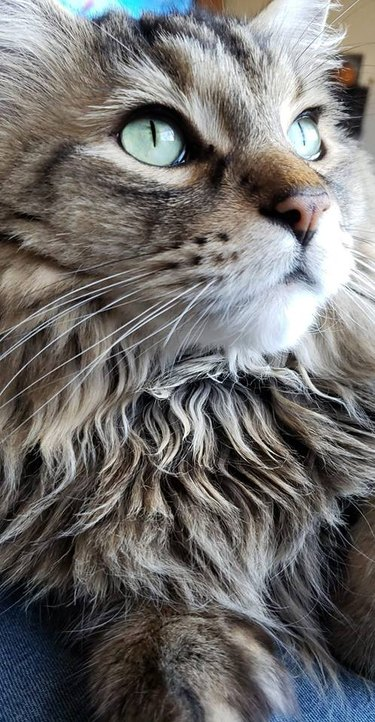 221 names for majestic cats
