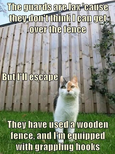 Cat in front of a wooden fence.