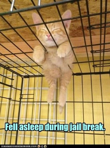 Kitten asleep on top of cage.