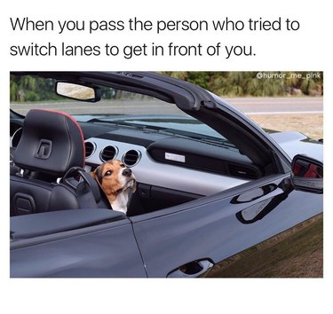 Dog in passenger seat of car looking superior. Caption: When you pass the person who tried to switch lanes to get in front of you.