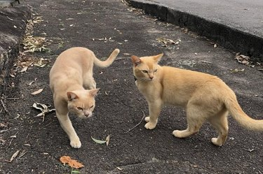 Two large cats on the street