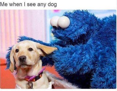 Cookie Monster petting a dog. Caption: Me when I see any dog