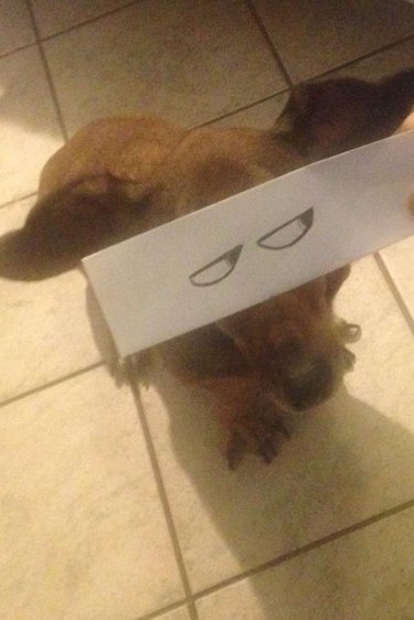 dog with cartoon eyes