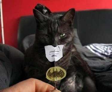 batman cat with cartoon mouth