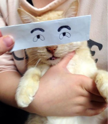 cat with cartoon eyes