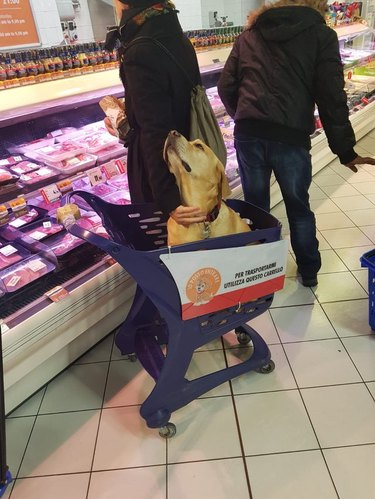 Dog sitting in cart in grocery store