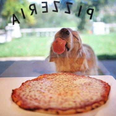 Dog licking window of pizzeria