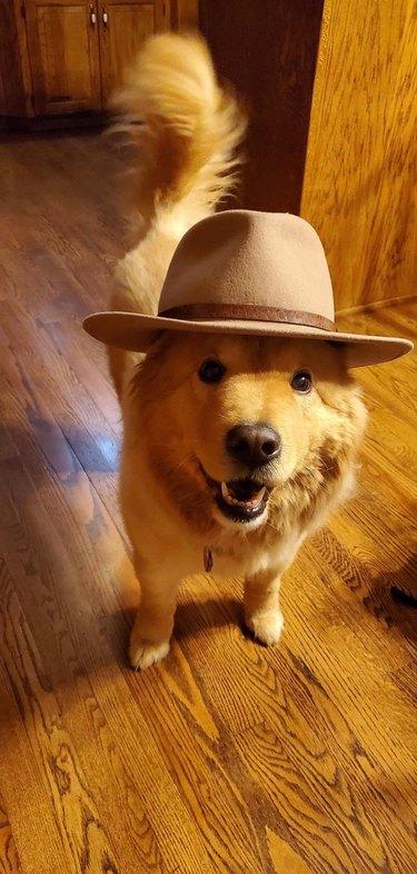 Dog wearing tan fedora