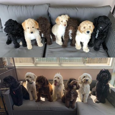 Pet Owners Are Sharing Pictures Of Their Dog Fams And We're Meeeeeeelting