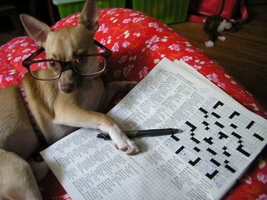 Dog wearing glasses and posing next to crossword puzzle.