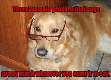 Dog wearing glasses. Caption: There's an old proverb that says pretty much whatever you want it to say.