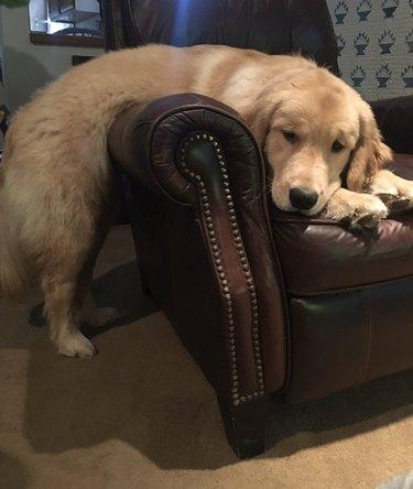 dog sleeps on arm chair