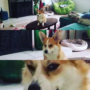 17 Things All Corgis Disapprove Of