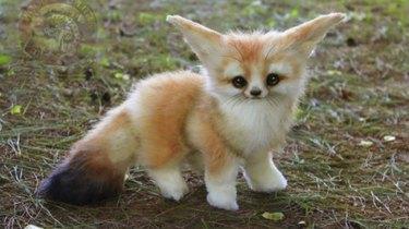 Little fox baby of some sort