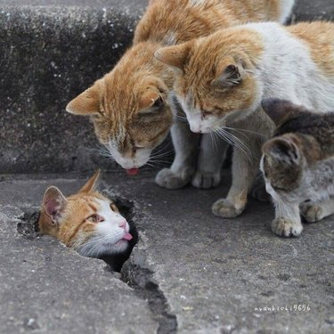 Group of cats with tongues sticking out