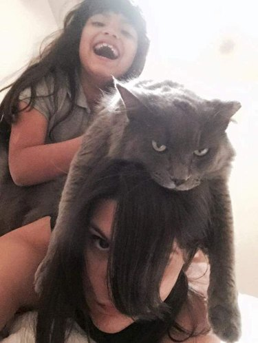 Cat on a girl's head
