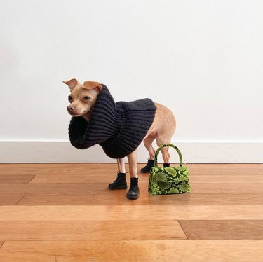dog in turtleneck and black shoes