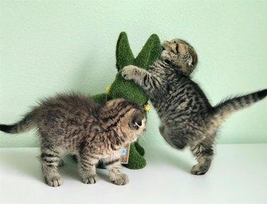 Kittens attacking something?