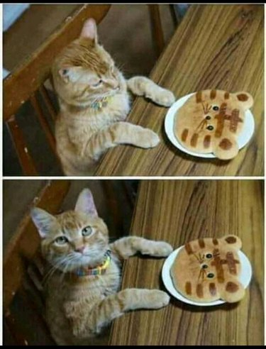 Cat not impressed by pancake that looks like cat