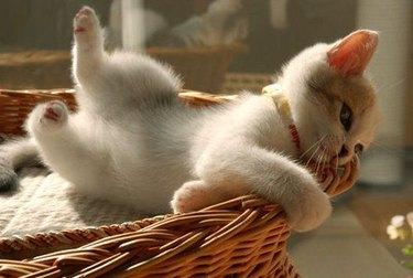 Little kitten rolling out of a basket