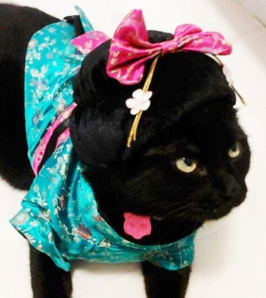 Cat dressed up