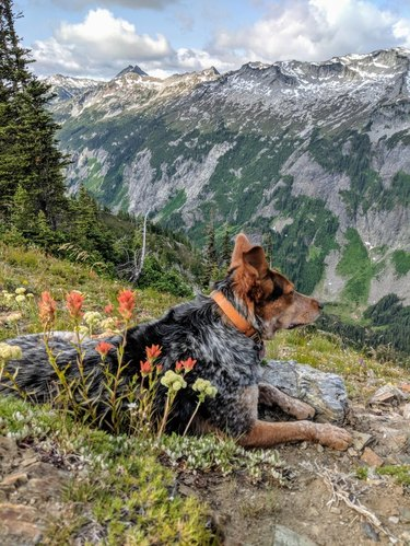 Dog on a mountaintop looking downhill