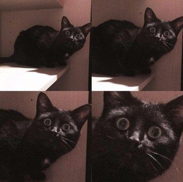 Startled cat.