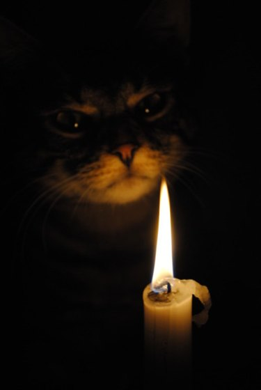 Cat in darkness lit by candle.