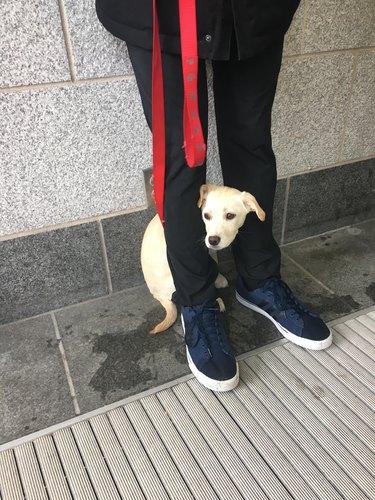 Puppy hiding between person's legs.