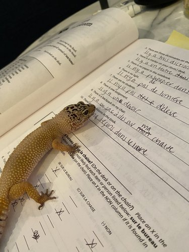 lizard sits on open book