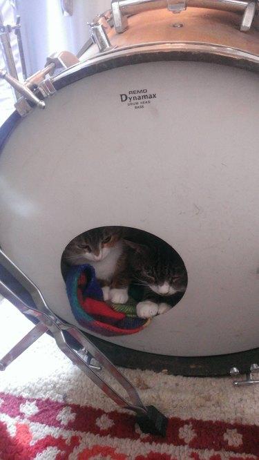 Kittens hiding inside kick drum.