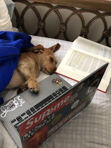 doggo falls asleep reading