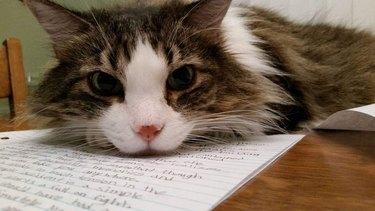 cat sits on homework