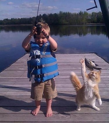 Cat grabbing fish from fishing pole held by toddler