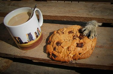 Cat stealing a cookie