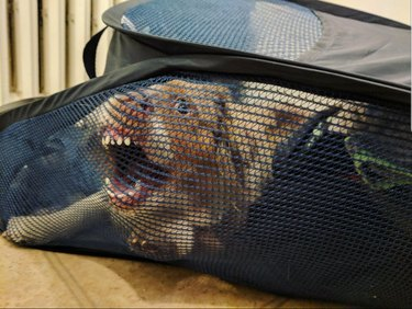 Dog with its teeth stuck on a mesh laundry basket.