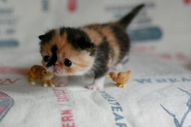 Tiny little kitten