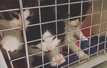 """Michigan police department """"interviews"""" kittens for very important job"""