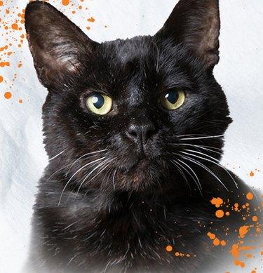 black cat on off-white background