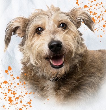 cute terrier dog on off-white background