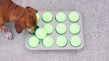 Dog pushing tennis ball off muffin pan