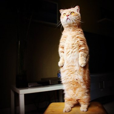 People are sharing pictures of their cats standing upright like humans and it's too damn funny