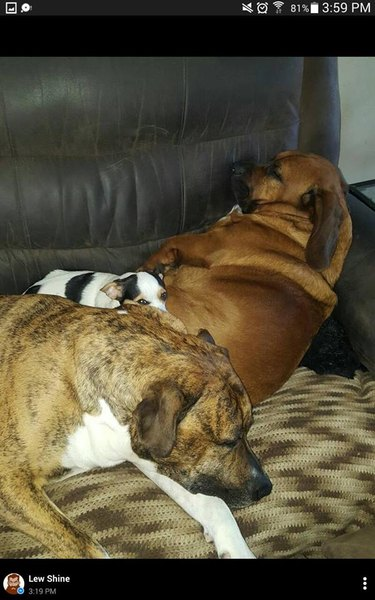 Pile of sleeping pups