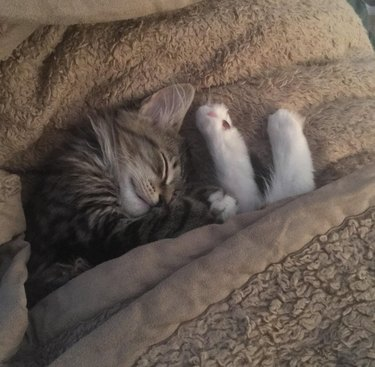 Cat under blanket with feet sticking out