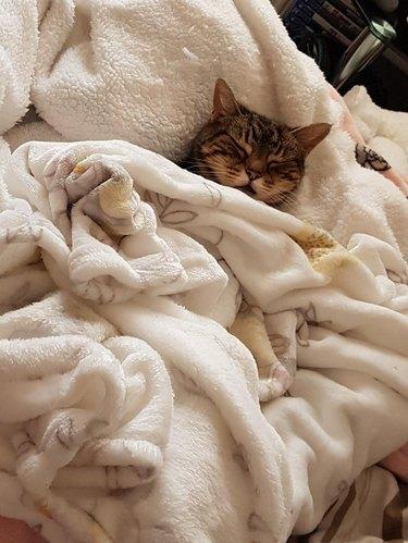 Cat under blanket