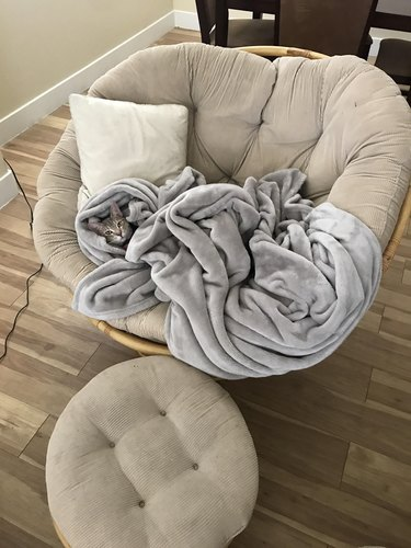 Cat under blanket in a chair