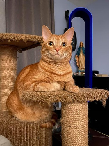 orange cat poses on cat tower