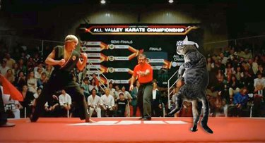 cat photoshopped into Karate Kid