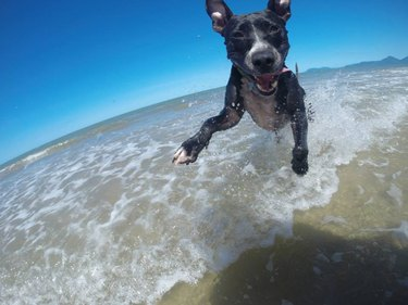 Happy dog on the beach